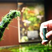 RA Green Line [200m] - nić mocująca do epifitów