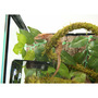 Repti-Zoo Liana z naturalnym mchem 2cmx2m