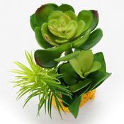 Roślina sztuczna Yusee - grubosz młody (16x14x14cm)