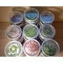 Rotala Bonsai (Ammania Bonsai) TROPICA in-vitro (w żelu)