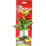 ROTALIA MARCANDRA 8 (GREEN) [22cm] - Rośliny z miękkiego, tkanego materiału