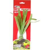 SAGITTARIA 8 [20cm] - Rośliny z miękkiego, tkanego materiału