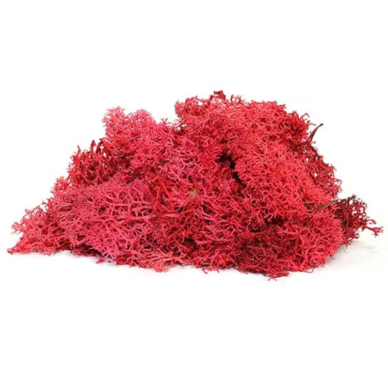 Secret Live Moss Blood Red - Mech Żywy porcja 5g