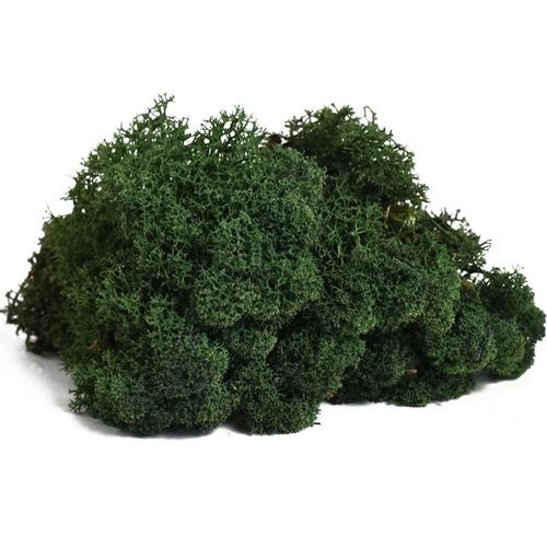 Secret Live Moss Dark Green - mech żywy porcja [5g]