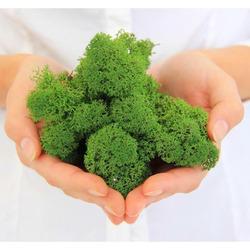 Secret Live Moss - Mech żywy porcja [5g] - light green