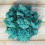 Secret Live Moss Sky Blue - Mech Żywy porcja 5g