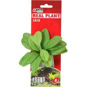 Sztuczna roślina SINGLE SAMOLUS 4 [11cm] - rośliny z miękkiego, tkanego materiału