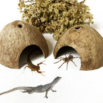 Terrario CocoCave L - połówka kokosa duża (gładka)