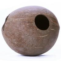 Terrario CocoLair - cały kokos gładki
