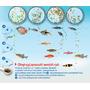 Tetra Micro Crisps [100ml] - dla małych ryb ozdobnych