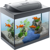 Tetra Starter Line LED 30 L Goldfish - Zestaw akwarystyczny