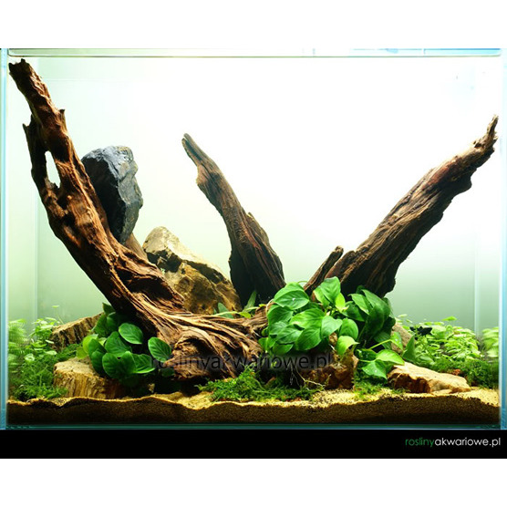 Tło matowe (mist półprzezroczyste) 50x50cm