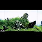 Trawnik z glossostigmy - zestaw roślin