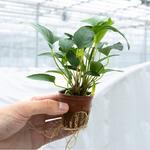 Usługa doboru roślin do akwarium (bon na zakup roślin 300zł)