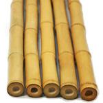 Vietnam Bamboo [25cm]  - bambus naturalny