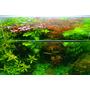 VIMI zestaw nawozów do akwarium HIGH-TECH z roślinami czerwonymi