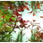 VIMI zestaw nawozów do akwarium LOW-TECH