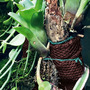 Wacool Rainforest Plant Cotton M - hydrolon [YZM003]