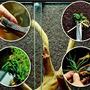 Wacool Rainforest Plant Cotton XL - hydrolon