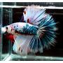 Zestaw dla bojownika FlowerFish 15x15x20cm [4.5l] (z oświetleniem LED)