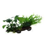 Zestaw: Microsorum i Anubias (BankWood Ornamental) - TROPICA (na korzeniu XL z przyssawkami)