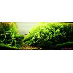 Zestaw nawozów VIMI SOLO [5x50ml] + hormony roślinne