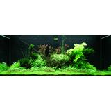 Zestaw roślin - 097 (300l) - 11 szt.