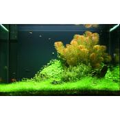 Zestaw roślin - akwarium 049 (100l) - 4 szt.