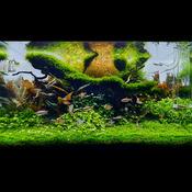 Zestaw roślin - akwarium 049 (100l) - 9 szt.