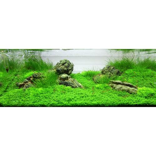 Zestaw roślin - akwarium 054 (72l) - 3 szt.