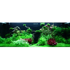 Zestaw roślin - akwarium 096 (300l) - 55 szt.