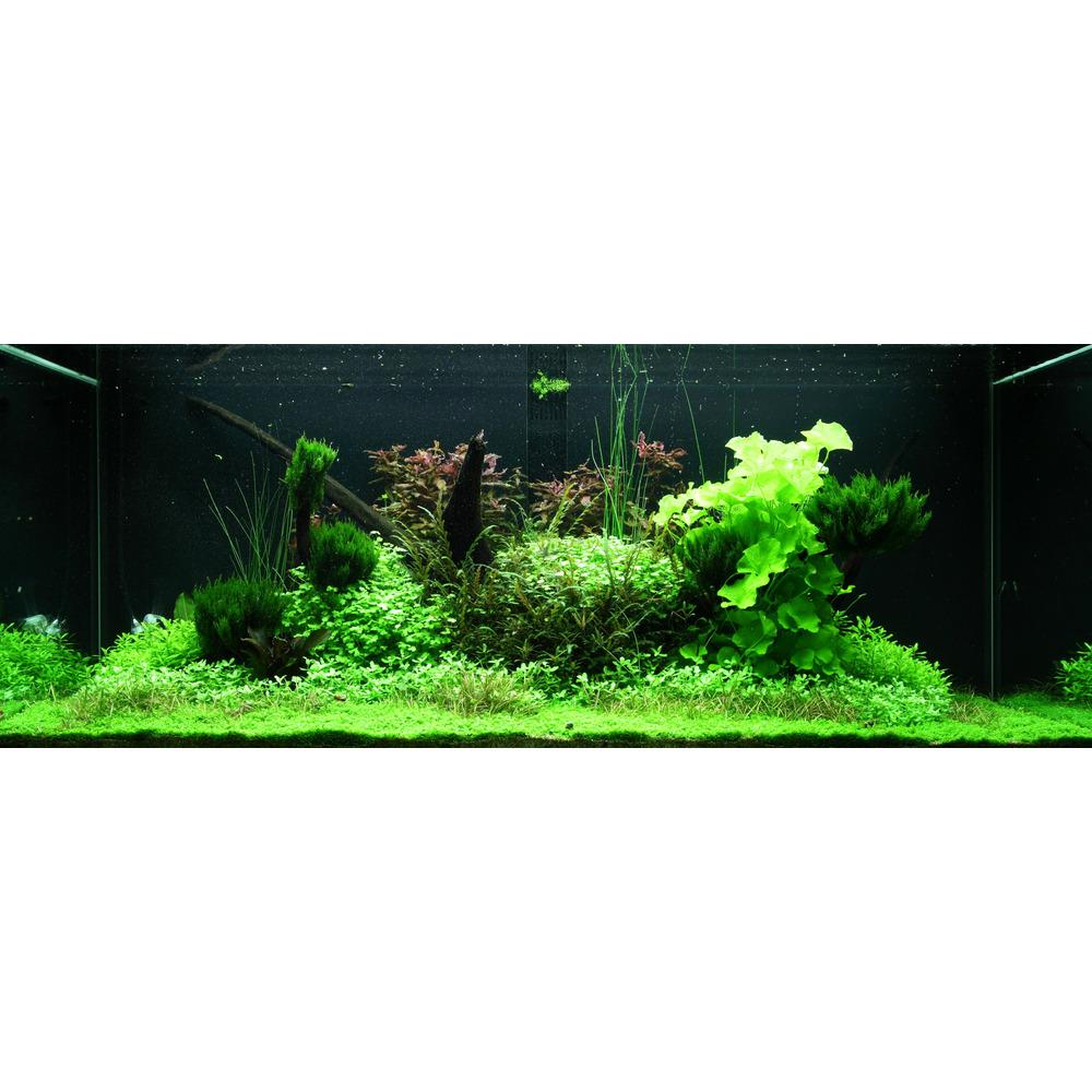 Zestaw roślin - akwarium 097 (300l) - 43 szt.