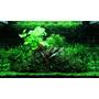 Zestaw roślin - akwarium 098 (100l) - 12 szt.