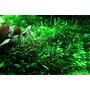 Zestaw roślin - akwarium 098 (100l) - 31 szt.