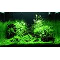 Zestaw roślin - akwarium 099 (100l) - 11 szt.