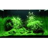 Zestaw roślin - akwarium 099 (100l) - 3 szt.