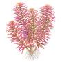 Zestaw roślin - akwarium 100 (100l) - 13 szt.