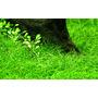 Zestaw roślin - akwarium 100 (100l) - 4 szt.