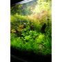 Zestaw roślin - akwarium 102 (27l) - 11 szt.