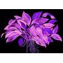 Zestaw roślin - akwarium 102 (27l) - 16 szt.
