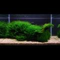 Zestaw roślin - akwarium 104 (28l) - 10 szt.