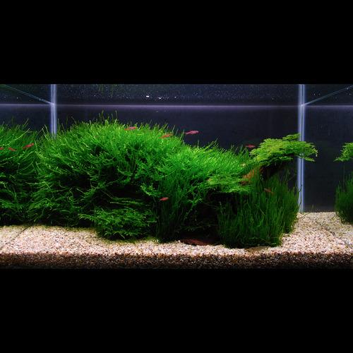 Zestaw roślin - akwarium 104 (28l) - 5 szt.