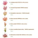 Zestaw roślin czerwonych (duży)