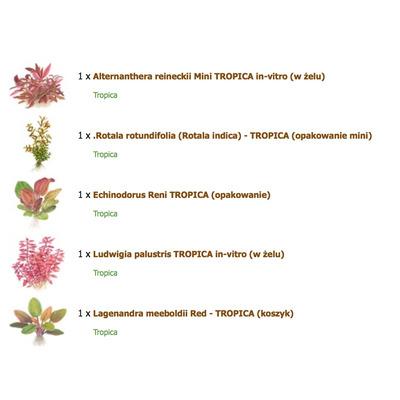 Zestaw roślin czerwonych (mini)