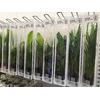 Zestaw roślin na start (9 opakowań)