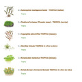 Zestaw roślin o nietpowym wyglądzie (duży)