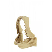 ZOLUX Dekoracja akw. czaszka dinozaura model 2