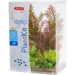 Zolux Dekoracja roślinna PLANTKIT IDRO model 1