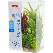 Zolux Dekoracja roślinna PLANTKIT IDRO model 4