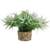 Zolux Roślina mała z zestawu nr 1